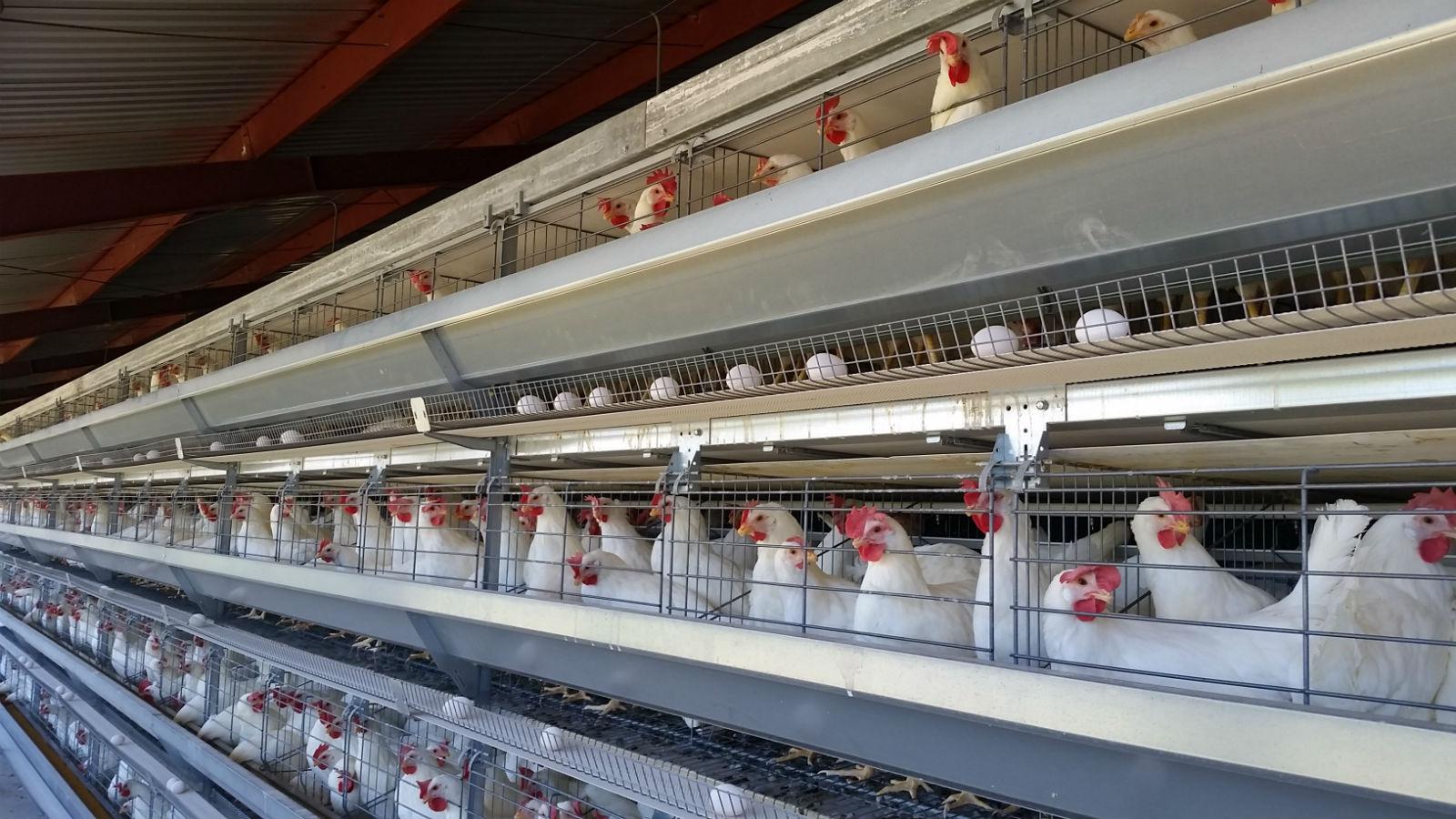 """</span>Equipo avícola<span style=""""color: #ffcc00;""""> confiable, duradero y exhaustivamente testado"""