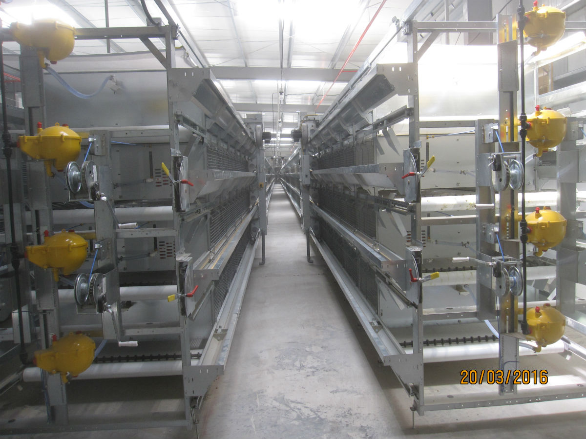 2 rows of S1000 rearing cage